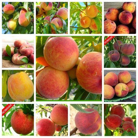 Яблоня, груша, персик, вишня черешня, персик, смородина, ежевика