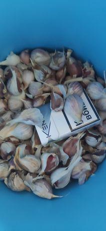 Семена чеснока 65 грн