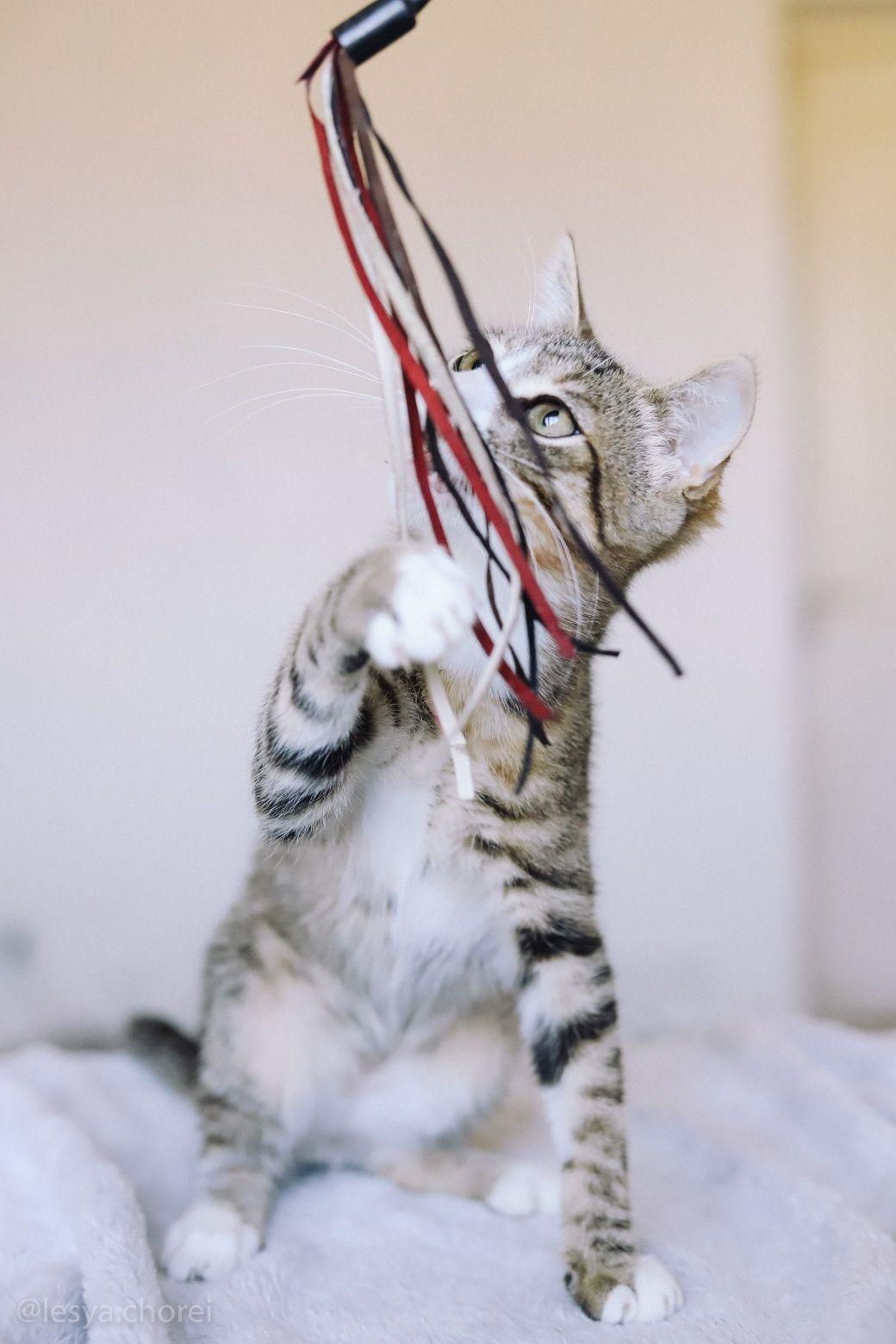 Полосатый котенок ищет семью
