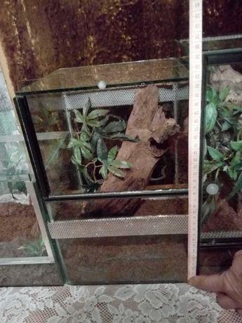 Terrarium szklane 20x20x32 cm gilotyna (pająk nadrzewny)