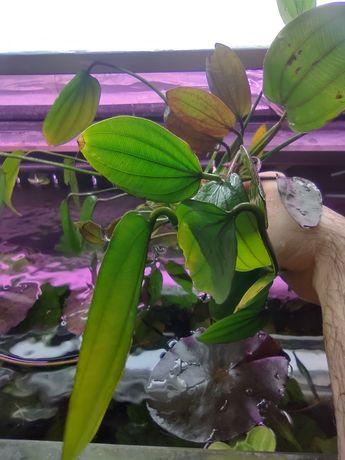 piękne żabienice