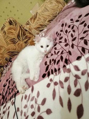 Кошка  красавица