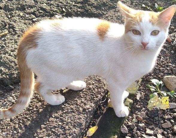 Милый котик Томик