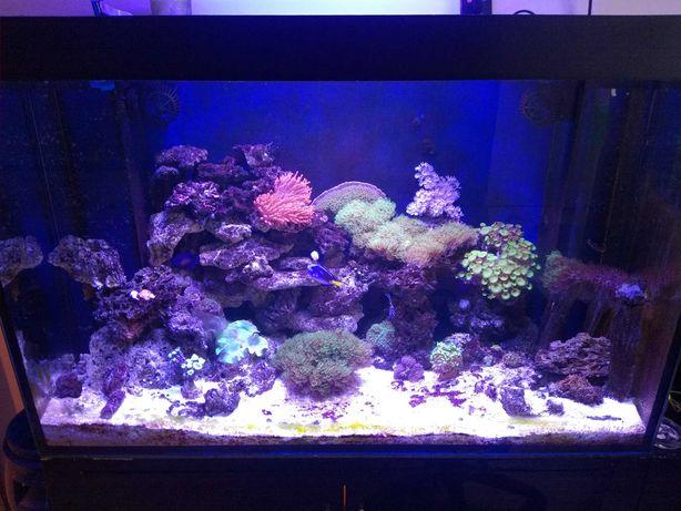 Żywa skała morskie