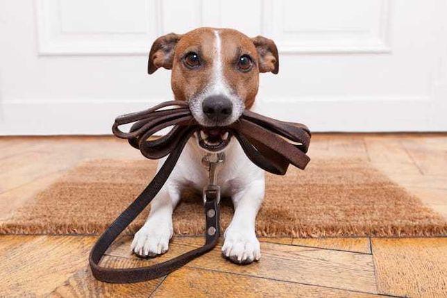 Passeio caes/Dog walker/Dog sitting