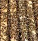 Odkłady pszczele ramka WZ i Wielkopolska