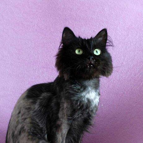 Не теряем надежды найти любящую семью котикам, нуждающимся в доме!