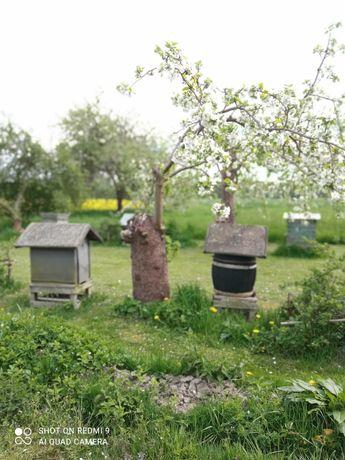 Sprzedam ule z pszczołami i miodarką