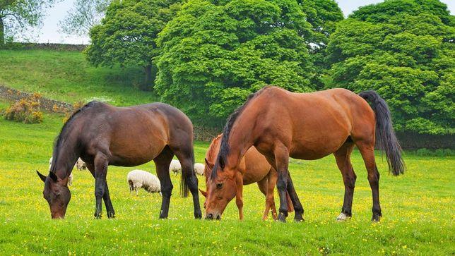 Nasiona traw i ich mieszanki dla koni! WYSYŁKA GRATIS!