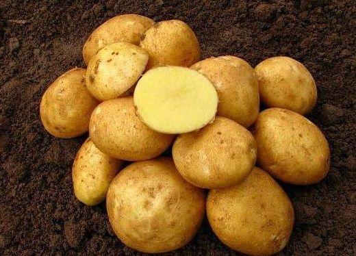 Ziemniaki Vineta 15kg