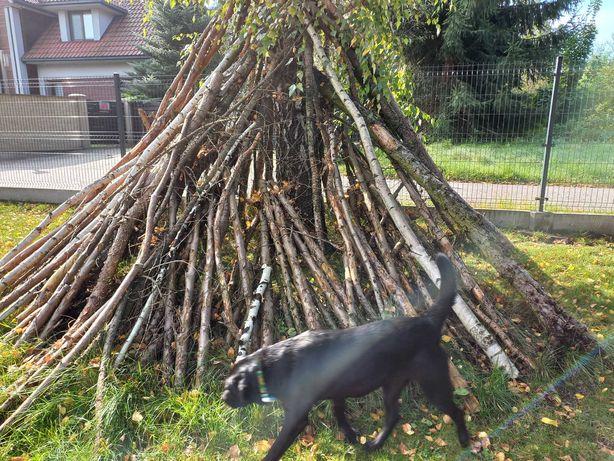 Oddam drewno, drzewo