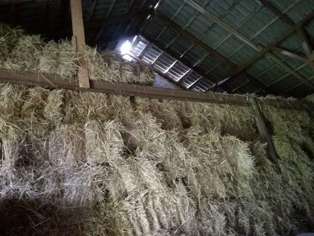 Słoma w kostkach ,zbiór 2020,mocno sprasowana,sucha ze stodoły