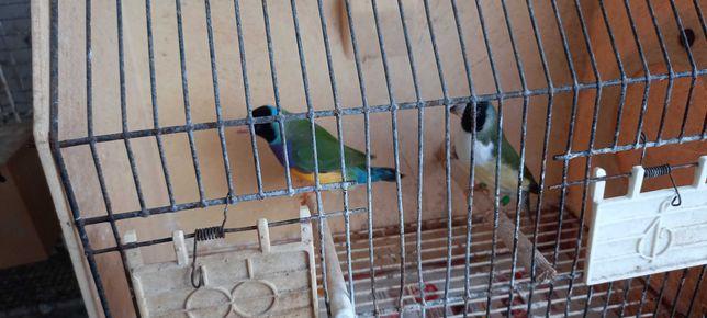Exóticos outras aves