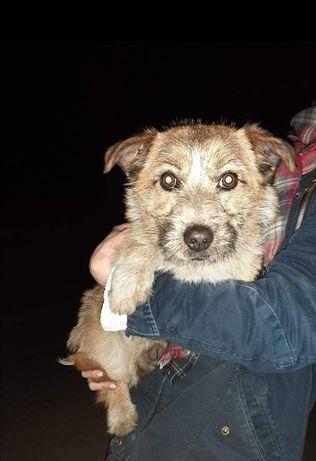 znaleziono psa Praszka