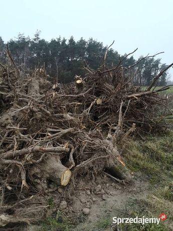 Korzenie drzew pinie, oddam za darmo  . Załadunek gratis transport
