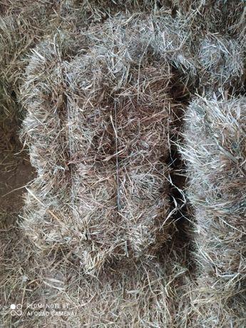 Siano łąkowe w kostkach