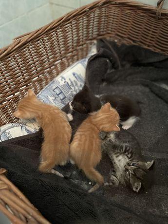Gatos bebés para dar