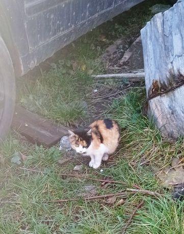 Кошенята шукають родину