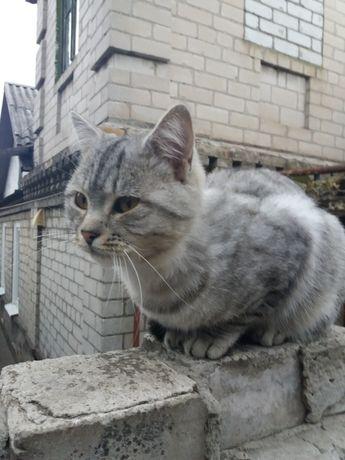 Найден молодой кот.