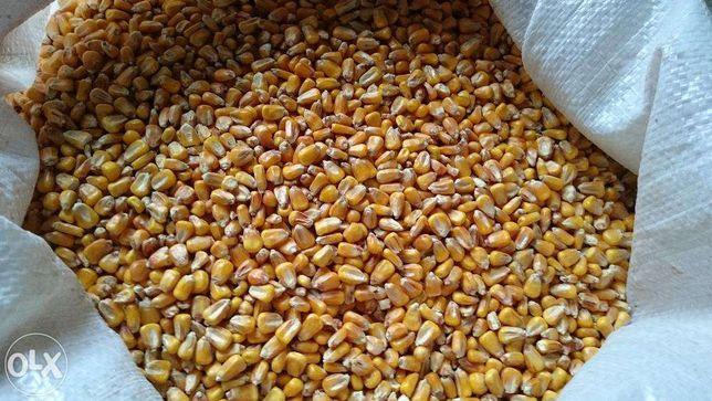 Kukurydza - całe ziarno lub mielone.