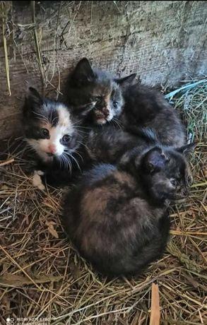 3 małe koteczki szukają domu (: