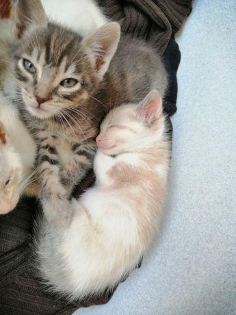 2 gatinhos lindos para adoção