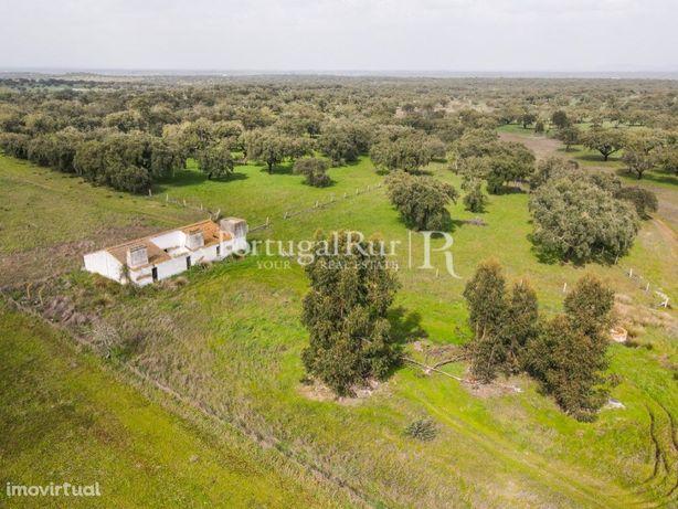Herdade com 94 hectares próximo de Arraiolos (Alentejo)