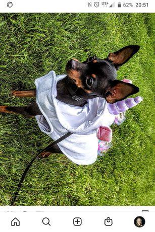 Ubranko ubranie kurtka dla psa pieska unicorn jednorożec ratlerek
