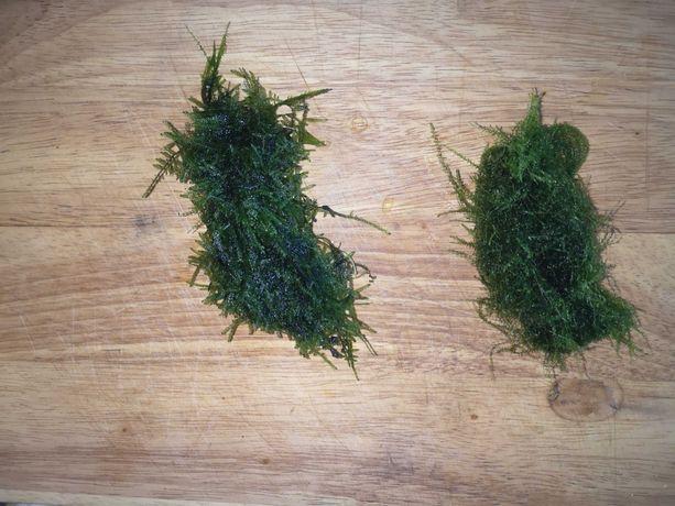 Rośliny z przycinki.