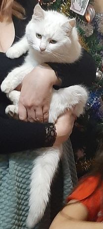 Пропала белая кошка