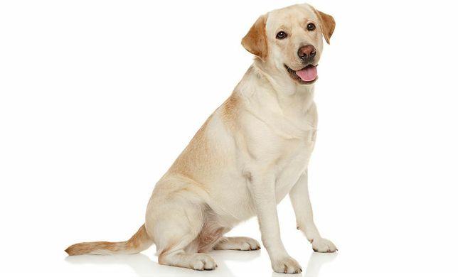 Кастрация самцов собак на дому.