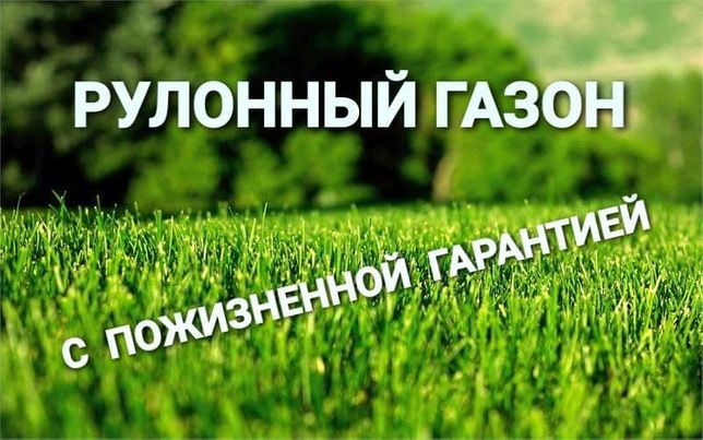 Газон в рулонах – зеленый ковёр за 1 день + капельный полив газона