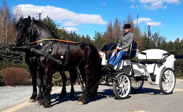 Kareta karoca dorożka powóz bryczka końmi do ślubu dzień dziecka