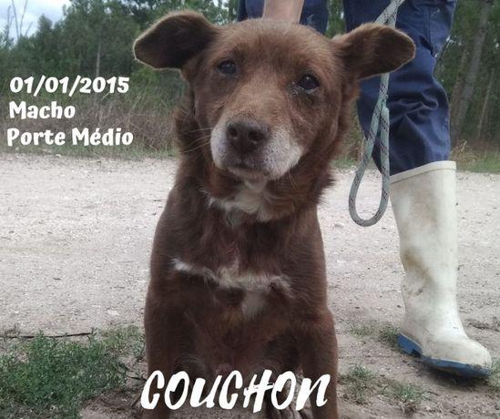 Cão Porte Médio Para Adoção (Couchon)
