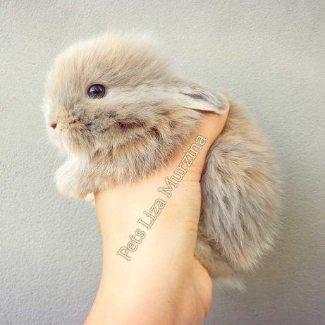 Декоративні кроленята, дуже ручні, виростуть до 1,5 кг, 066005два144