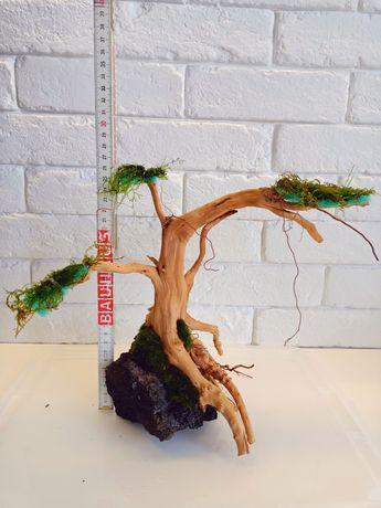 Drzewko da akwarium