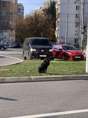 Замечена собака, кобель. Найдена, пропала