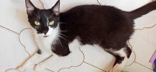 Zielonooka 1,5 roczna kotka pragnie domu Iwona Tom.