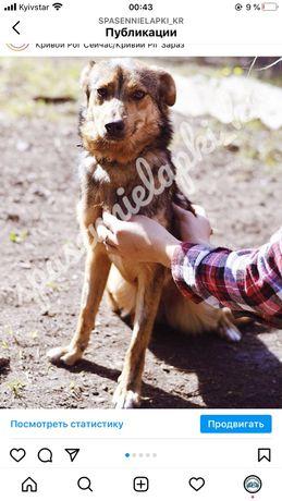 Собака девочка ищет дом