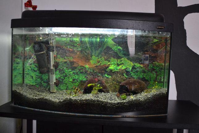 Akwarium 50l z czarną szafką pod akwarium grzałką i filtrem