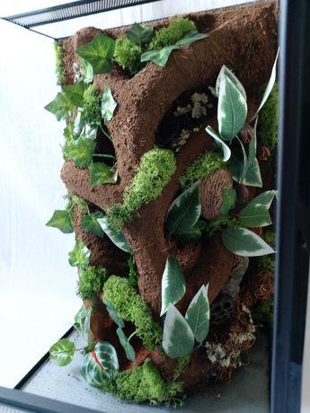 nowe terrarium pionowe z wystrojem żaba gekon orzęsiony wij pająk wąż