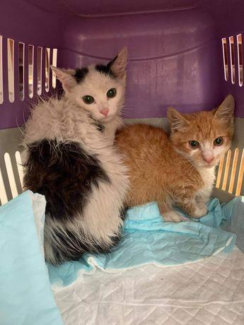 Kociaki szukaja kochającego  domu