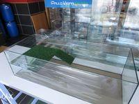 Aquario Tartarugueira nova 100 x 40 x 30 com plataforma