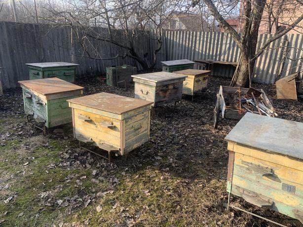 Вулики для бджіл Дадан 10 шт (ціна договірна)
