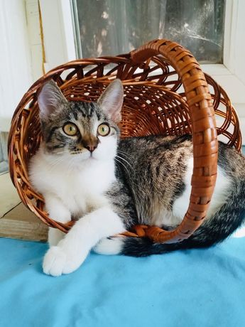 Кошечка Муся (бесплатно)