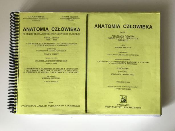 Anatomia czlowieka tom I Bochenek skrypt