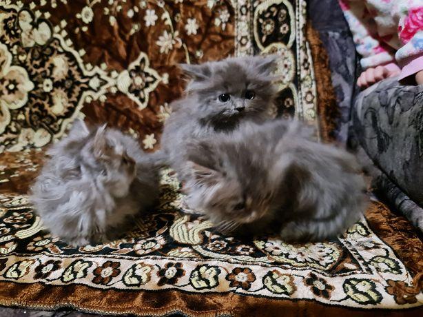 Котята Пушистые котятки