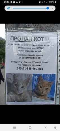 Потерялся котик, помогите найти!