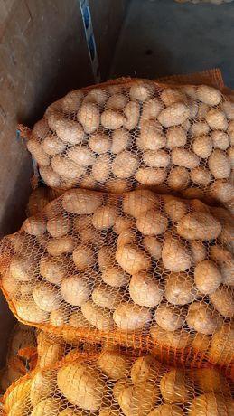 Ziemniaki jadalne DENAR OWACJA