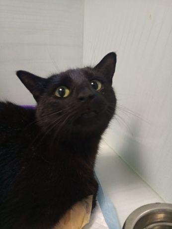 Чорна перлина кішечка Нора. 1 рік, стерилізована.